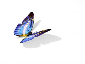 PageLines-ButterflyDaniloRizzutiFotolia_9899939_M.jpg